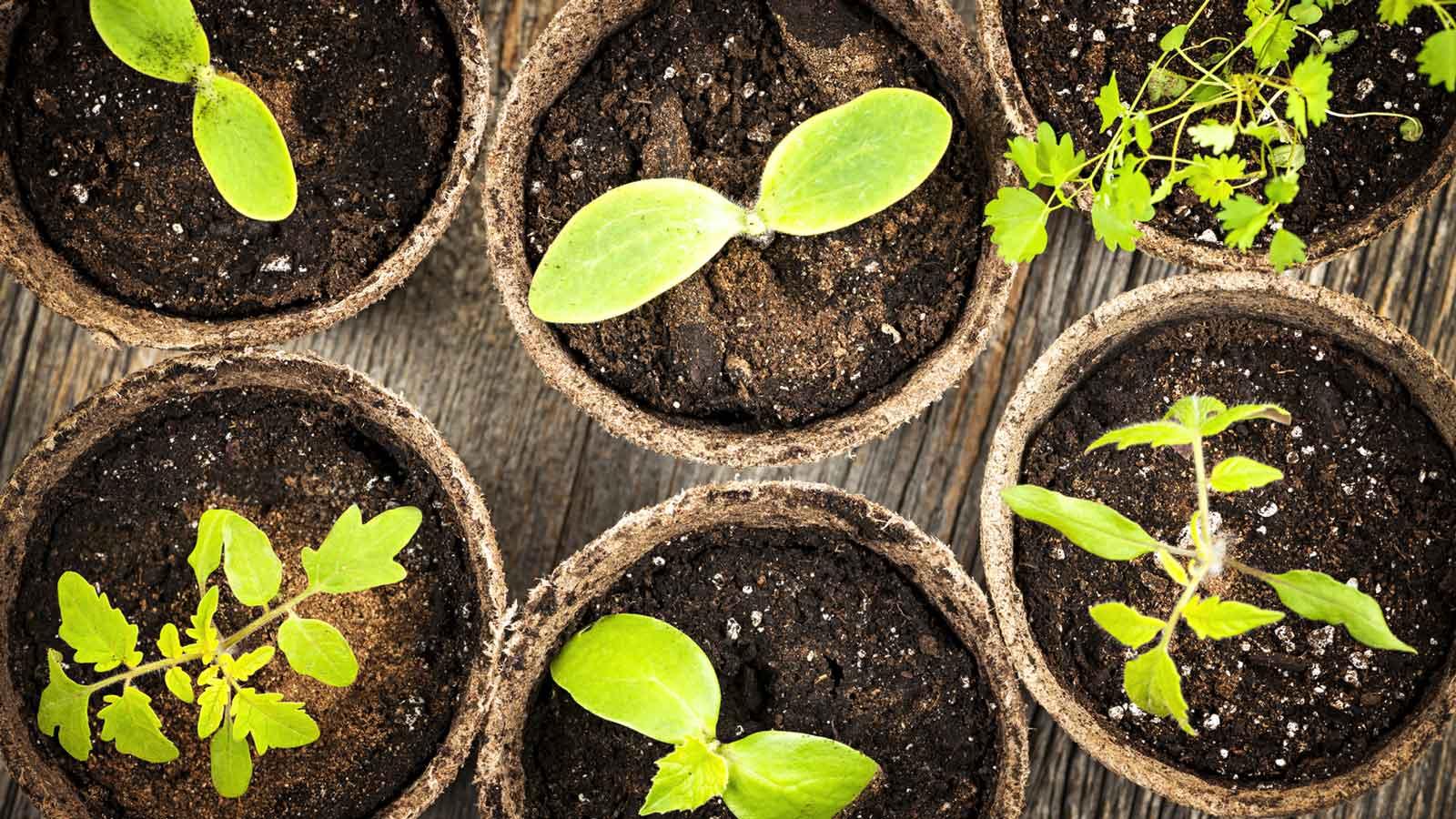 Compostiera, una seconda vita per gli scarti vegetali | Riciblog