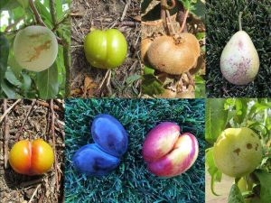 Frutta bella dentro: il progetto antispreco - Riciblog
