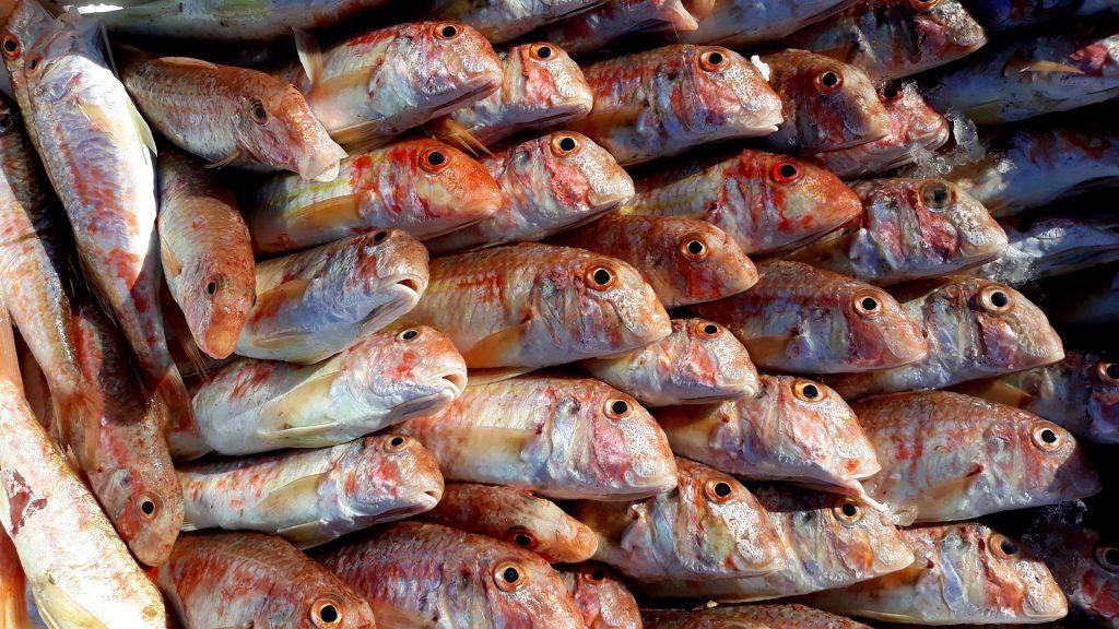 Salsa di pesce all'orientale riutilizzando gli scarti - Riciblog