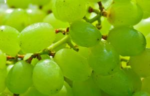 Proprietà della buccia d'uva - Riciblog
