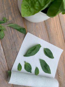 Come conservare il basilico appena raccolto in frigo - Riciblog